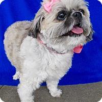 Adopt A Pet :: Gizmo - Irvine, CA