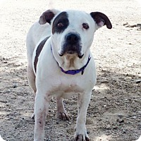 Adopt A Pet :: Maggie - grants pass, OR