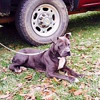 Adopt A Pet :: Chance - Beaumont, TX