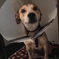 Adopt A Pet :: Reba - Weatherford, TX