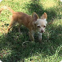 Adopt A Pet :: Ruby - Ardmore, OK