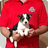 Adopt A Pet :: Sparky - Gahanna, OH
