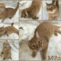 Adopt A Pet :: Milton - Joliet, IL