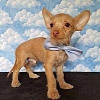 Adopt A Pet :: Levon - Troutville, VA