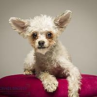 Adopt A Pet :: Sabrina - needs a happy ending - Bedminster, NJ