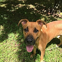 Adopt A Pet :: Dudley - Homestead, FL