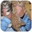 Photo 1 - Domestic Shorthair Kitten for adoption in Randolph, New Jersey - Pooh BEAR and Little Eeyore