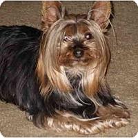 Adopt A Pet :: Fayne - LE MESA, CA