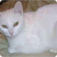 Adopt A Pet :: Snow - Greenville, SC