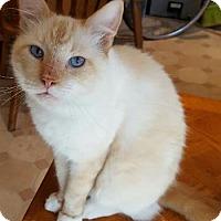 Adopt A Pet :: Handsome - Davis, CA