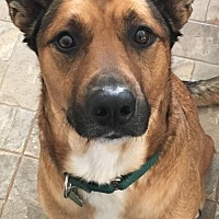 Shepherd (Unknown Type) Mix Dog for adoption in Severn, Maryland - Lucky