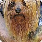 Adopt A Pet :: Xander