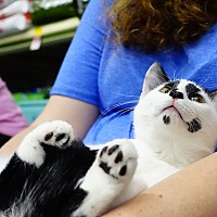 Adopt A Pet :: wall-E - College Station, TX