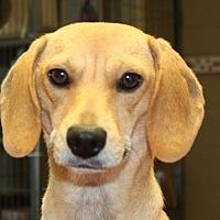 Adopt A Pet :: October - Sparta, NJ