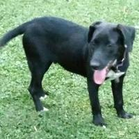 Adopt A Pet :: Bradley - Richmond, VA