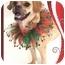 Photo 2 - Pug/Beagle Mix Dog for adoption in Rigaud, Quebec - Phoebe