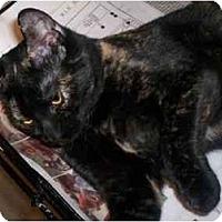 Adopt A Pet :: Kitten 2 - Richmond, VA