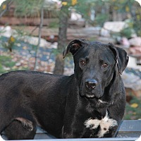 Adopt A Pet :: Wally - Greeley, CO