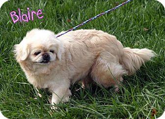 Pekingese Mix Dog for adoption in Lewisburg, West Virginia - Blaire