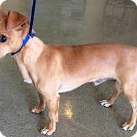 Adopt A Pet :: Paco Chia - Woodland, CA