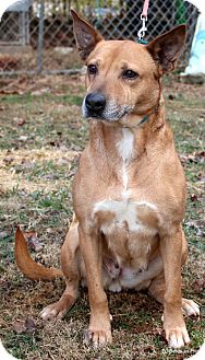 Shepherd (Unknown Type) Mix Dog for adoption in Bedford, Virginia - Baby