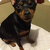 Adopt A Pet :: Snoop - Syracuse, NY