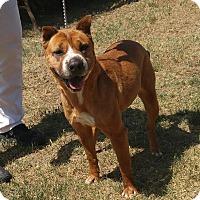 Adopt A Pet :: Crissy - Mira Loma, CA