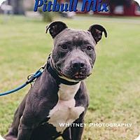 Adopt A Pet :: Blue - Cheney, KS