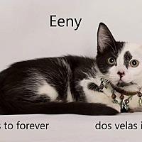 Adopt A Pet :: Eeny - Sherman Oaks, CA