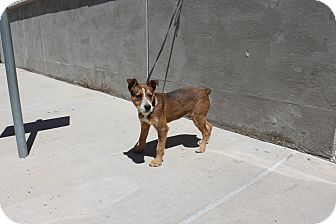 Terrier (Unknown Type, Medium) Mix Dog for adoption in Odessa, Texas - A14 Hugs