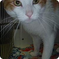 Adopt A Pet :: Blaze - Hamburg, NY