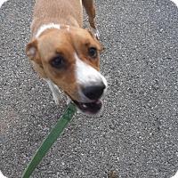 Adopt A Pet :: Jenna - Batesville, AR