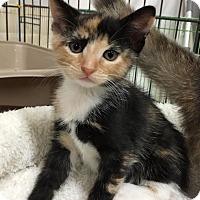 Adopt A Pet :: Julie - Centerville, GA