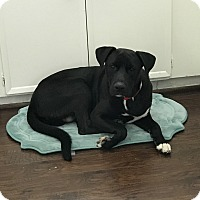 Adopt A Pet :: Phineas - Spring, TX