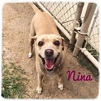 Adopt A Pet :: Nina - Ocala, FL