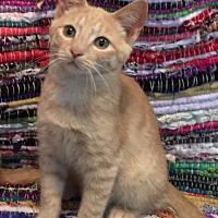 Adopt A Pet :: Twizzler -Adoption Pending! - Colmar, PA