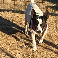 Adopt A Pet :: Dory - Surrey, BC