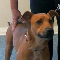 Adopt A Pet :: 155812 - Bakersfield, CA