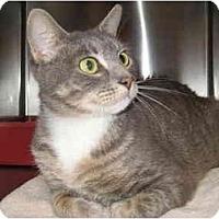 Adopt A Pet :: Melanie - Jenkintown, PA