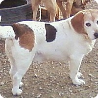 Adopt A Pet :: Andy - Toledo, OH