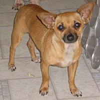 Adopt A Pet :: Jose - Half Moon Bay, CA