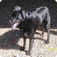 Adopt A Pet :: Carrie - Farmingtoon, MO