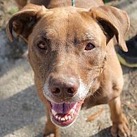 Adopt A Pet :: Athena - Memphis, TN