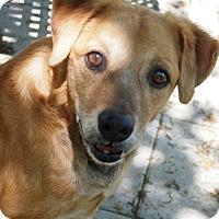 Adopt A Pet :: Justice Joe - Ravenel, SC