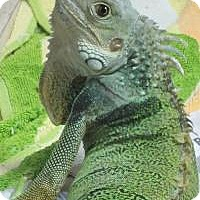 Adopt A Pet :: Jabberwocky - Quilcene, WA