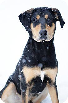 Doberman Pinscher Mix Dog for adoption in Kankakee, Illinois - Geronimo