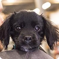 Adopt A Pet :: Whimsey - Minneapolis, MN