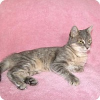 Adopt A Pet :: Cordelia - Hamilton, ON