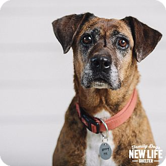 Boxer Mix Dog for adoption in Portland, Oregon - Avalon