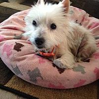 Adopt A Pet :: Willa-Sanctuary Sweetheart - Omaha, NE